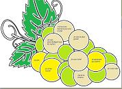 Image parabole des vignerons
